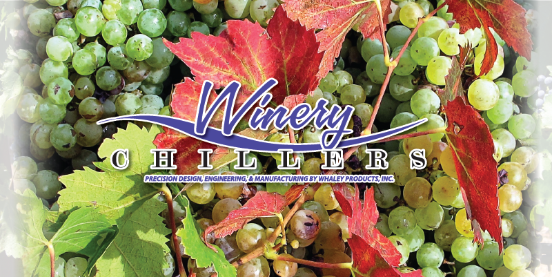 winery-grapes